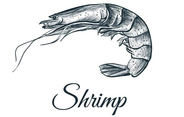 Pray for shrimp