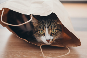 SEC Regulation on Crypto Tokens, Explained With Cat Photos