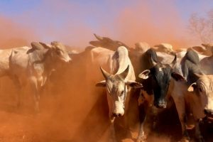 The Bulls Are Back in the Digital Asset Market