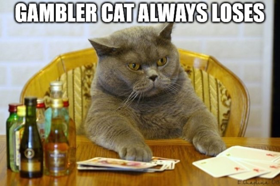 Gambler cat always loses